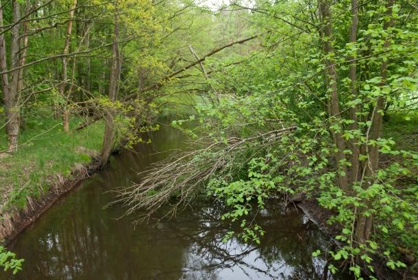 Rzeka Gunica