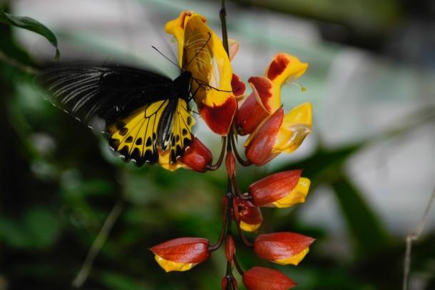 Zaskakująco kompatybilny mariaż fauny z florą