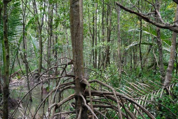 Zielone piekło, czyli równikowe lasy deszczowe. Wyglądają dość niewinnie, ale w środku jest duszno, parno i bardzo gorąco.