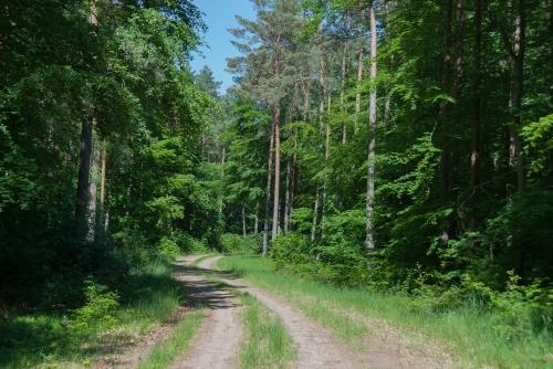 Leśna droga z Grünhof do Mewegen