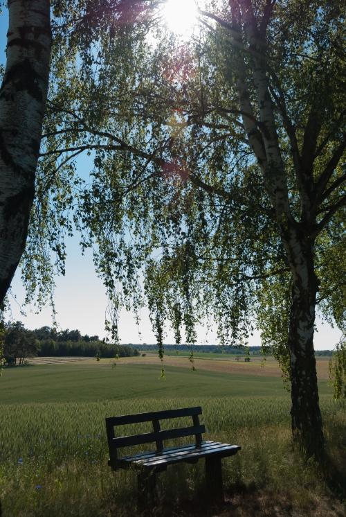 Romantyczna ławeczka na drodze do Hohenfelde