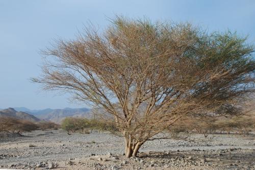 Jałowy krajobraz pod Ras-al.-Chajma