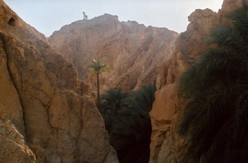 Zdjęcie wykonane jeszcze analogowym aparatem, więc nie jest idealne w wersji cyfrowej. Oaza Tamerza w Górach Atlas, przy przejściu granicznym z Algierią. Piękne surowe góry, a w oazie wodospad i małe jeziorko, z chłodną orzeźwiającą wodą.