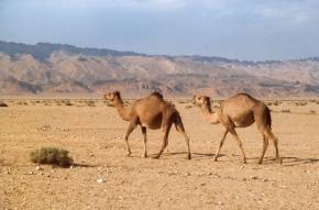Tunezja (1) – co się z niąstało?