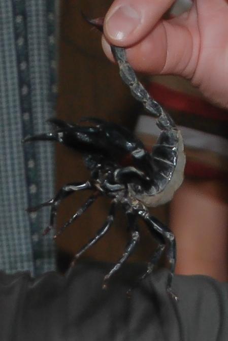 W domu tubylców, mieszkających na wsi. Zdjęcie niewyraźne, ale stanowi żywy dowód na to, że skorpiona jednak schwycić można. Trzeba to zrobić uchwyciwszy za kolec jadowy.